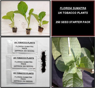 Florida Sumatra Tobacco Seed Packs