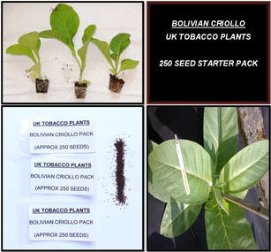 Bolivian Criollo Tobacco Seed Packs