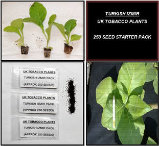 Turkish Izmir Tobacco Seed Packs